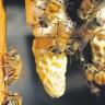 Ugledajte se na pčele i ostanite mladi