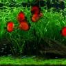 Ljepota tropskog slatkovodnog akvarija