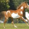 Konj u posjetu