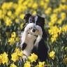 Engleska - Radost zbog prvog proljetnog cvijeća