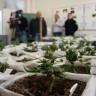 Otkriven laboratorij za uzgoj 'skunka'