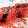 Prijatelji životinja apeliraju protiv pokolja tuljana