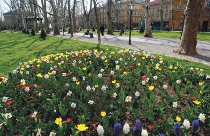 Kako Crnogorac daje cvijeće