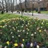 Kako Crnogorac daje cvijeće djevojci