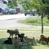 Psi lutalice u bugarskom zoo vrtu poklali 13 rijetkih životinja