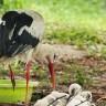 Obilježava se Svjetski dan ptica selica