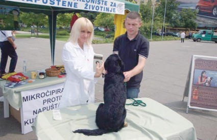 Usađivanjem mikročipa u jednoga psa iz skloništa, dokazano je da je riječ o bezbolnom i jednostavnom postupku