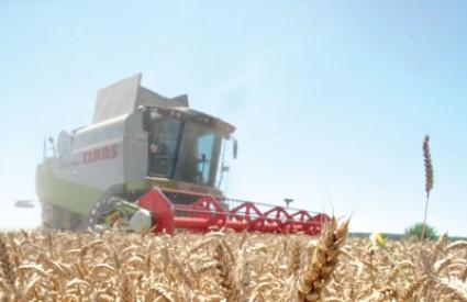 Pšenica je, nažalost problem ...