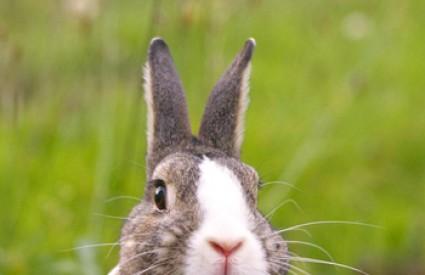 Ovaj je kunić dokazao koliko je zečje srce snažno unatoč mitovima.
