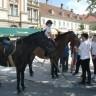 Arapski konji zavšili sedmodnevni put