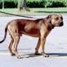 Pooštravaju se uvjeti držanja opasnih pasa