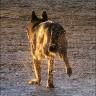 Mujina potraga za izgubljenim psom