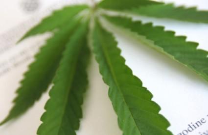 Urugvaj, obećana zemlja za marihuanu
