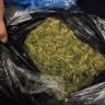 Česi će uskoro pušiti legalnu travu