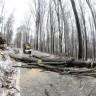 Uklanjaju oštećena stabla na Medvednici