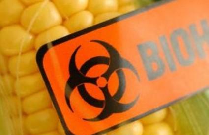 GMO nas polako uništava