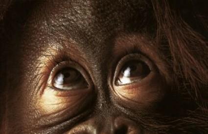 Pametniji smo od orangutana? Hmmm, pa i ne baš ..