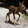Bambi spašen nakon strašne nesreće