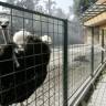 Mujo u posjetu zoološkom vrtu