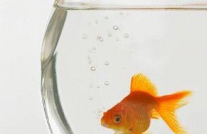 Što će plavuša sa zlatnom ribicom