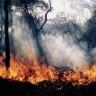 Dim požara nosi mikrobe tisućama kilometara