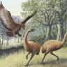 Divovska ptica ljudožder doista je postojala