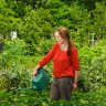 Uriniranje po sadnicama povrća pospješuje njegov rast