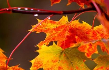 Kako iskoristiti jesen za zdravlje