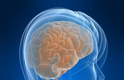 Ženski mozak je manji, ali radi fantastično