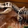 Pronađena očuvana krv dinosaura?
