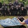 Tuguju li čimpanze doista?
