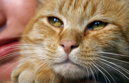 Mačka je navodno na sebi imala bombu