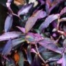 Biljke koje će osvježiti prostor i ukloniti zračenja