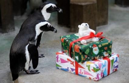 pingvini pred svojim poklonima