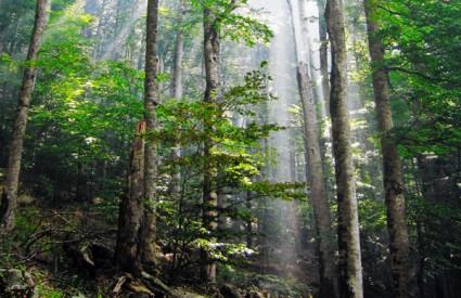 Bolesna stabla ispuštaju metan