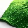 Povećanjem biljnih pora protiv klimatskih promjena