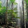 Priča o čovjeku koji je zasadio prašumu