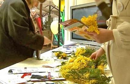 Mimoze se mogu kupiti na Cvjetnom trgu