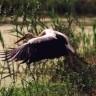 Organizirano promatranje ptica u Crnoj Mlaki 31. siječnja
