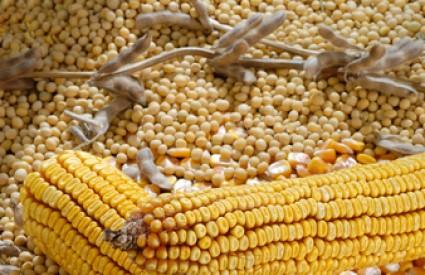 Soja i kukuruz jedu se u cijelom svijetu