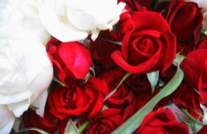 Crvene ruže kupuje 80 posto muškaraca