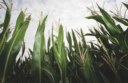Tamna strana biogoriva - glad i siromaštvo
