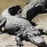 Aligator iznenadio učenike osnovne škole