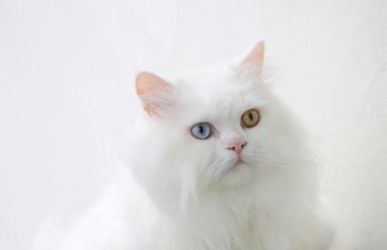 mačka Kimba rublje