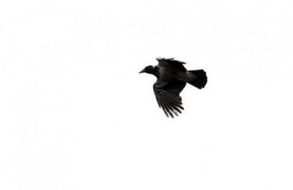 vrana Malešnica