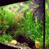 Mujo i akvarij