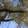 Namjerno prepilio drvo na kojem je stajao mlađi brat