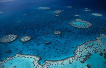 Koraljni grebeni ugroženi su od plastike