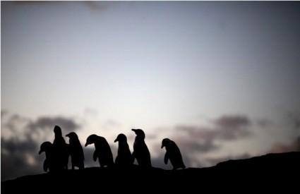 Britansko vrijeme deprimira i pingvine