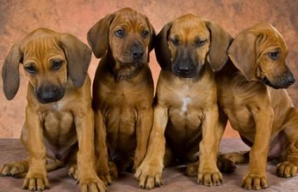 Šangaj bilježi neviđen porast populacije pasa